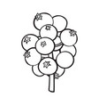black and white mistletoe berries christmas holly vector image vector image