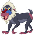 cartoon mandrill baboon isolated on white backgrou vector image vector image