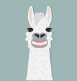 happy alpaca smile vector image vector image