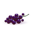 ripe blackcurrant vector image vector image
