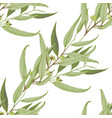 seamless pattern with hand drawn seeded eucalyptys vector image vector image