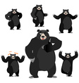 Baribal American black bear set Grizzly various vector image