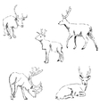 Deer sketch Pencil drawing by hand vector image