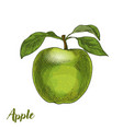 green apple with leaves vector image vector image