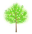 vector stylized tree vector image vector image