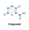 clopyralid is a selective herbicide vector image vector image