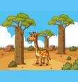 giraffe in desert ground vector image vector image