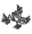 Rhacophorus vintage engraving vector image vector image