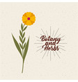 botany and herbs design vector image vector image