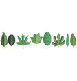set tree leaves vector image