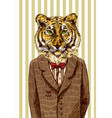 tiger in jacket vector image vector image