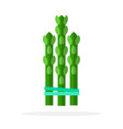 asparagus flat material design isolated object on vector image