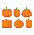 set ripe orange pumpkins vector image vector image