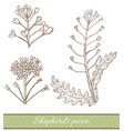 shepherds purse in hand drawn style vector image vector image