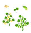 Cucumber plant with seeds and flowers vector image vector image