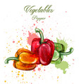 peppers watercolor juicy colorful vector image vector image