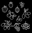 superfood berries icon set rosehip strawberry vector image vector image