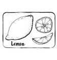 fruit sketch black and white fruit sketch hand vector image
