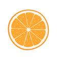 orange fruits vector image