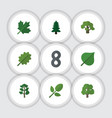 flat icon nature set of tree alder foliage and vector image vector image