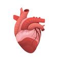 human heart anatomy flat 3d vector image vector image