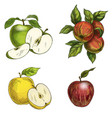 full color realistic sketch hand drawn painted vector image vector image