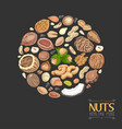 isolated circle of nuts and seeds vector image vector image