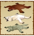 Skins set of forest animals bears and wolf vector image vector image