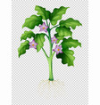 eggplant tree on transparent background vector image