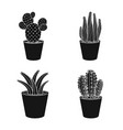isolated object of cactus and pot icon set of vector image