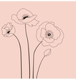 Poppies flowers vector image
