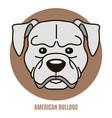 portrait american bulldog vector image