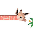 bagiraffe and butterfly vector image