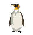 king penguin vector image