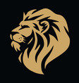 lion gold logo template vector image