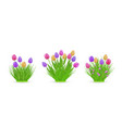 spring floral tulip bundles of different widths vector image vector image