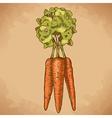 engraving carrot retro vector image vector image