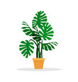 flat monstera houseplant in a ceramic pot vector image