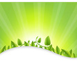 Green Leaves With Sunburst vector image vector image