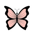 pink butterfly isolated on white vector image