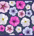 seamless background from petunia flowers vector image vector image