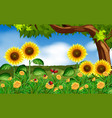 sunflowers and ladybugs in garden vector image vector image