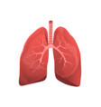 human lungs realistic medicine flat vector image vector image