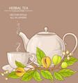 nutmeg tea vector image vector image