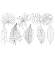 set of tropical palm leaves black vector image vector image