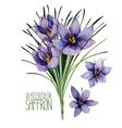 Watercolor saffron flowers vector image
