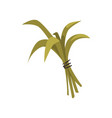 bundle green bamboo leaves tied with rope vector image