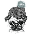 cartoon fashionable funny pug in stylish hat vector image vector image