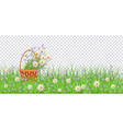 green grass daisy chamomile wicker basket vector image