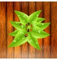 Green leaves with dew drops and ladybugs vector image vector image